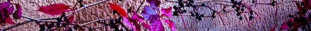 herbstliche Pflanzenblätter an Mauer
